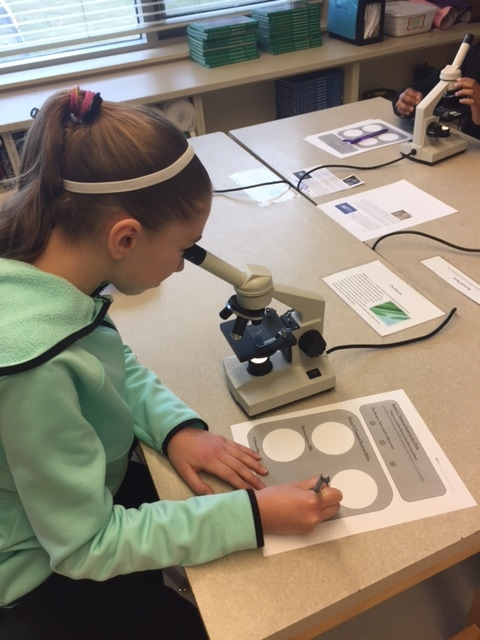 Learning About Prokaryotic Cells In 6th Grade Science The